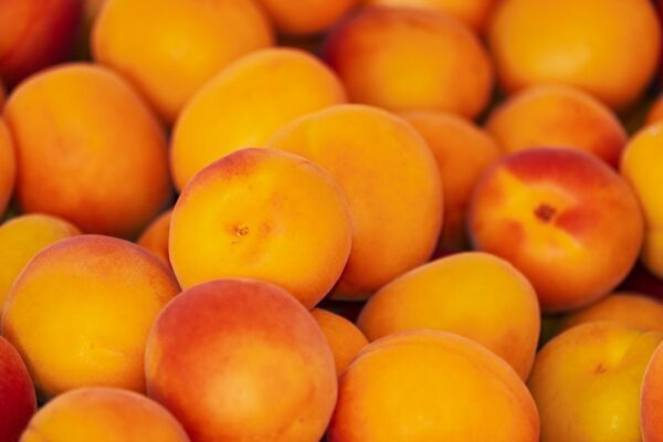 apricots, apricot, fruit