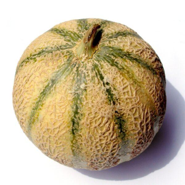charentais melon, melon, charentais